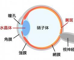 網膜色素変性症