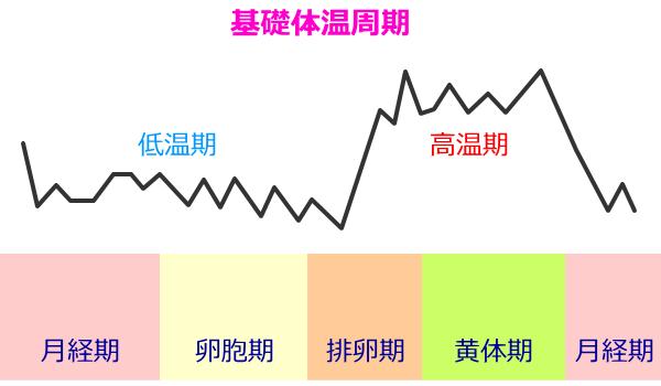 基礎体温周期